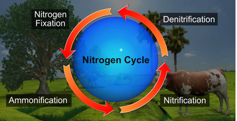 What is nitrogen cycle explain with a diagram natural resources in which nitrogen in the atmosphere is passed into the soil and life forms and then released back into the atmosphere is called the nitrogen cycle ccuart Image collections