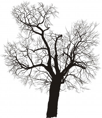 Calculate a tree's age