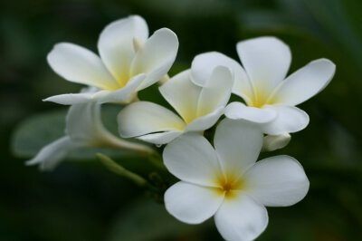 Change the color of a white flower