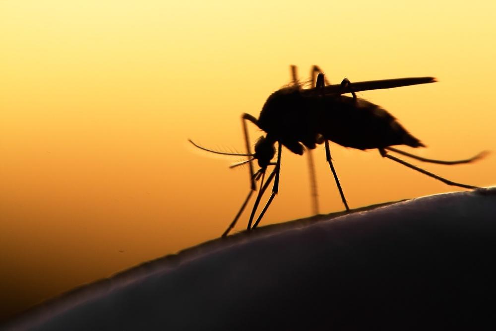 World Malaria Report 2019 published