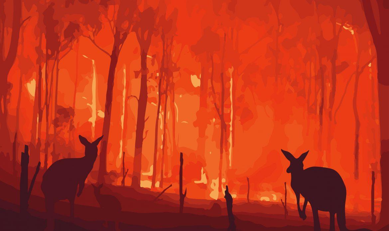 Australia wildfires cause massive destruction