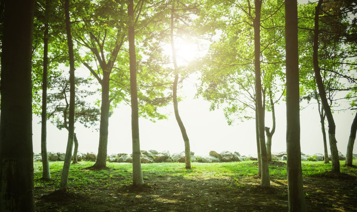 WEF launches initiative to grow one trillion trees by 2030