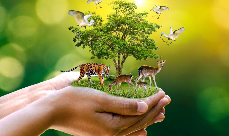 Ten migratory species to get global protection