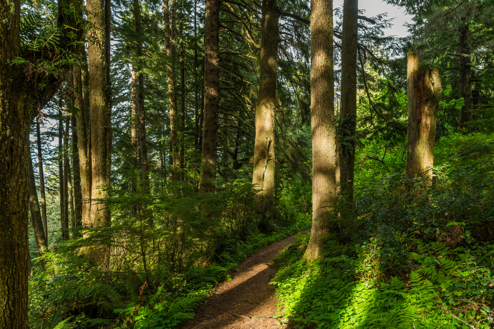 Climate change leading to shorter and younger trees
